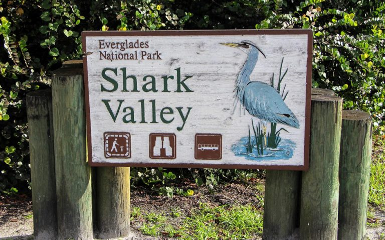 Explore the Florida Everglades - Shark Valley